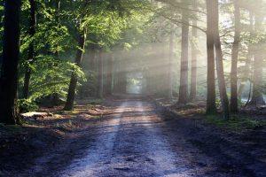 با زیباترین جنگلهای شمالی آشنا شوید